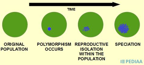 Difference Between Allopatric and Sympatric Speciation