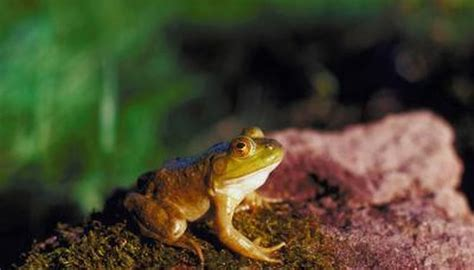What Is It Called When Frogs Breathe Through Their Skin