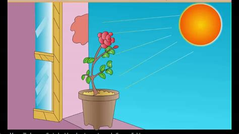 Science Experiments - To Demonstrate That Plants Move